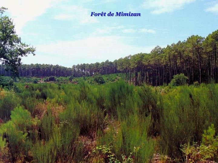 Forêt de Mimizan