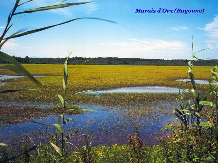 Marais d'Orx (Bayonne)