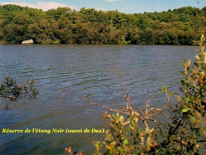 Réserve de l'étang Noir (ouest de Dax)