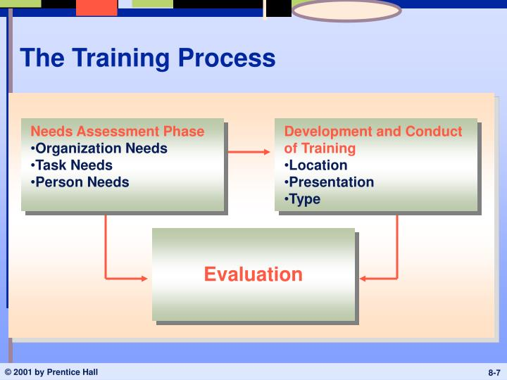 The Training Process