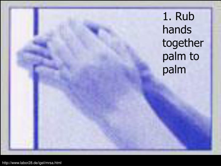 1. Rub hands together palm to palm