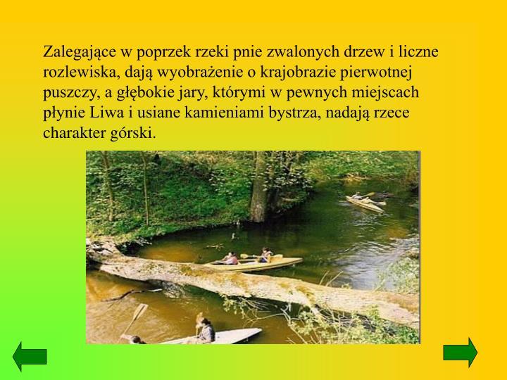 Zalegające w poprzek rzeki pnie zwalonych drzew i liczne rozlewiska, dają wyobrażenie o krajobrazie pierwotnej puszczy, a głębokie jary, którymi w pewnych miejscach płynie Liwa i usiane kamieniami bystrza, nadają rzece charakter górski.