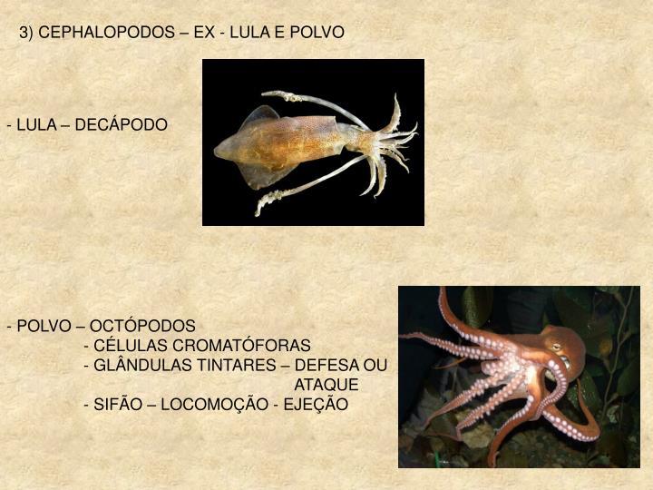 3) CEPHALOPODOS – EX - LULA E POLVO