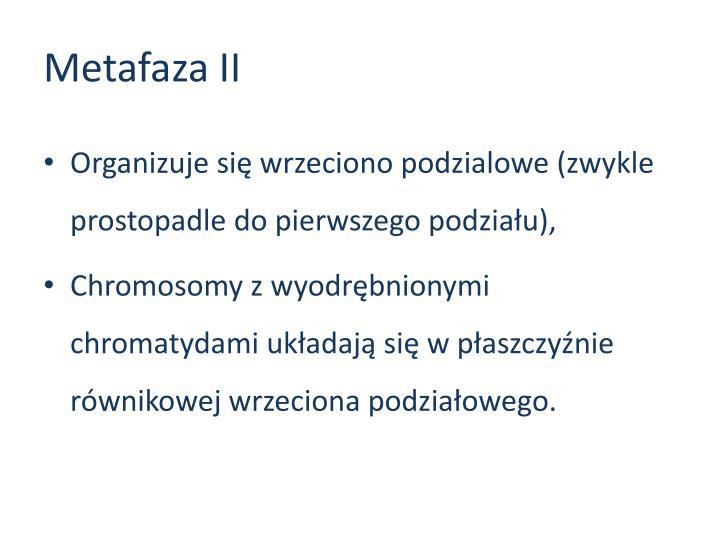 Metafaza II