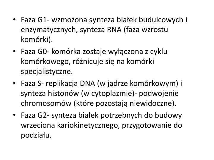 Faza G1- wzmożona s