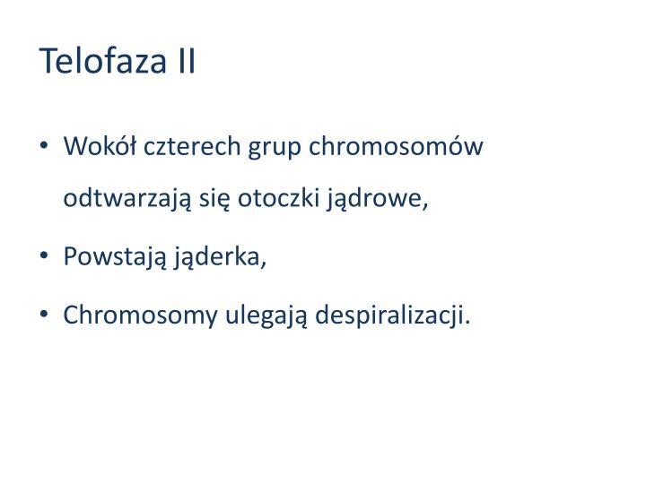 Telofaza II