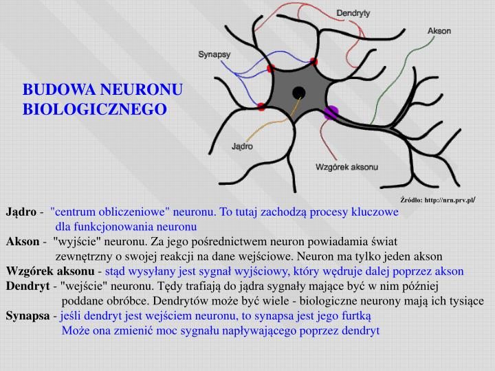 Źródło: http://nrn.prv.pl