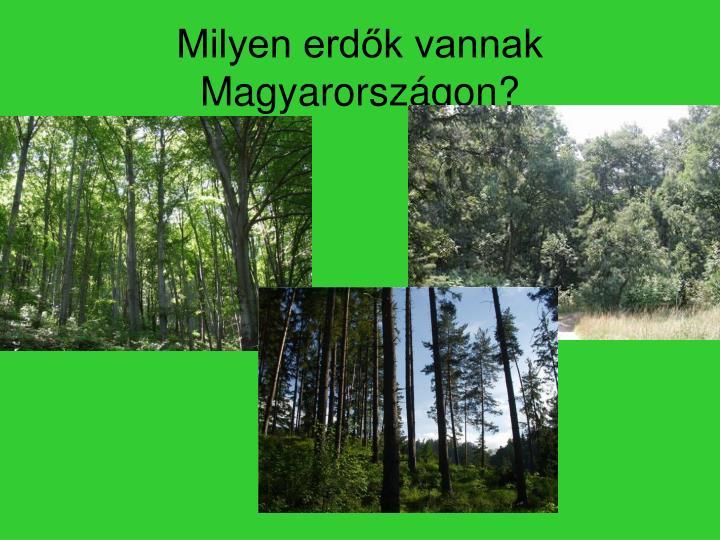 Milyen erdők vannak Magyarországon?