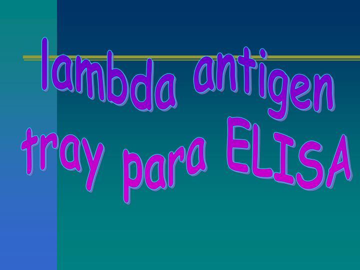 lambda antigen