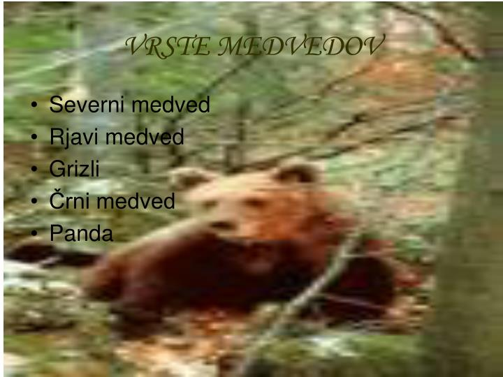 VRSTE MEDVEDOV