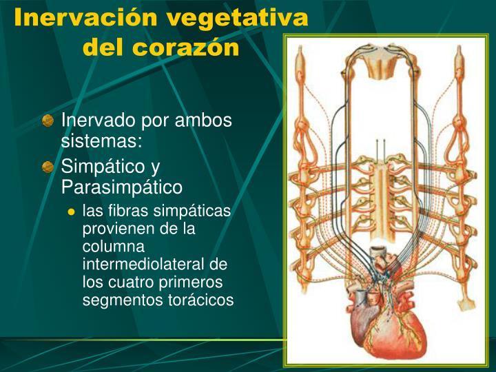Inervación vegetativa del corazón