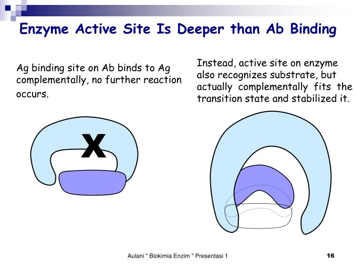 Enzyme Active Site Is Deeper than Ab Binding
