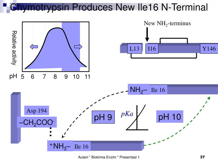 Chymotrypsin Produces New Ile16 N-Terminal