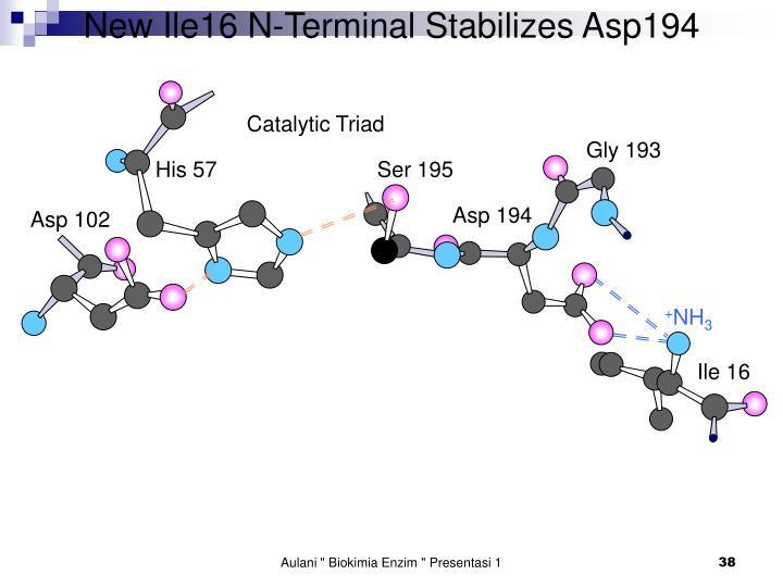 New Ile16 N-Terminal Stabilizes Asp194
