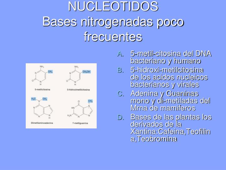NUCLEOTIDOS