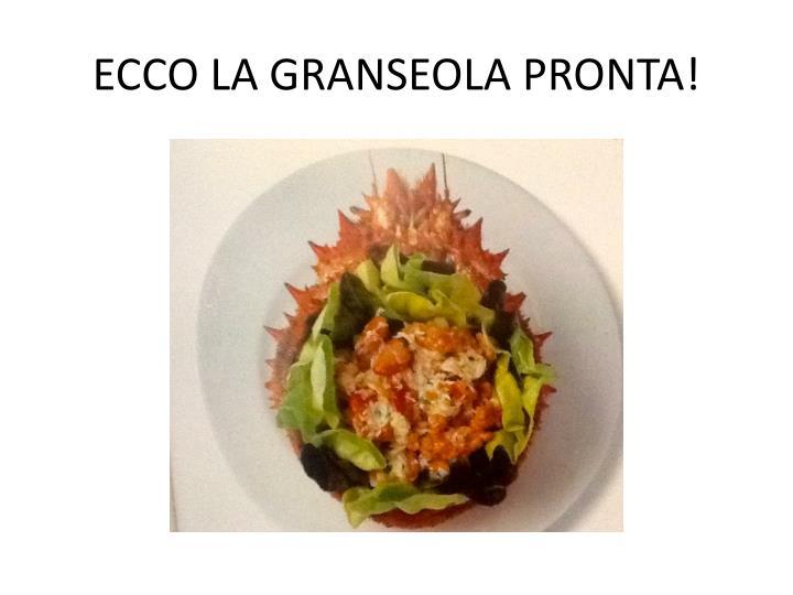 ECCO LA GRANSEOLA PRONTA!