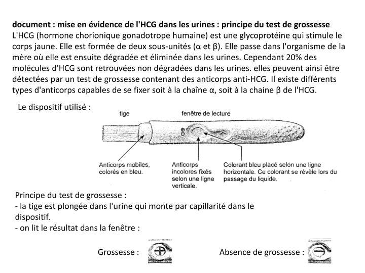 document: mise en évidence de l'HCG dans les urines: principe du test de grossesse