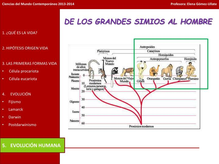 DE LOS GRANDES SIMIOS AL HOMBRE