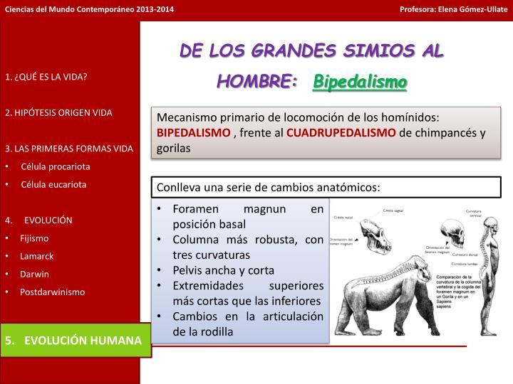DE LOS GRANDES SIMIOS AL HOMBRE: