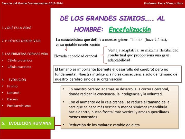 DE LOS GRANDES SIMIOS….. AL HOMBRE: