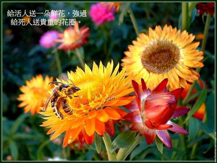 給活人送一朵鮮花,強過給死人送貴重的花圈。