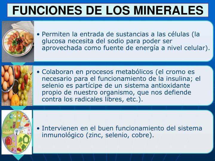 FUNCIONES DE LOS MINERALES