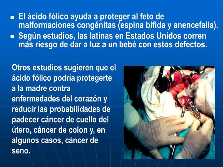 El ácido fólico ayuda a proteger al feto de malformaciones congénitas (espina bifida y anencefalia).