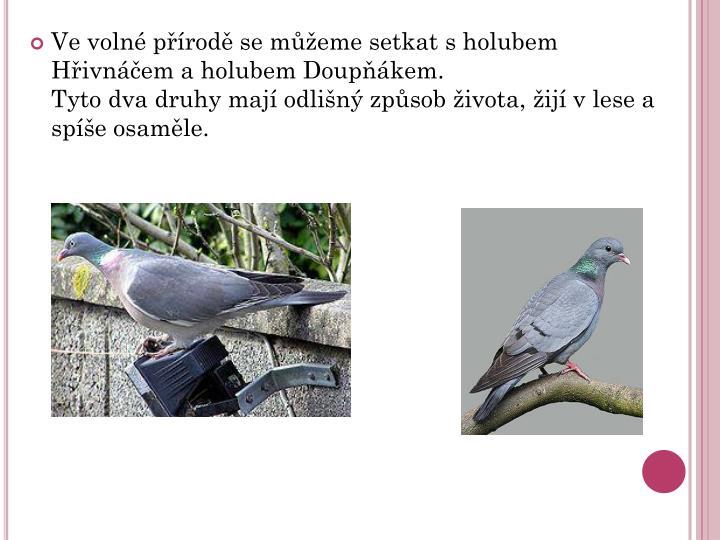 Ve voln prod se meme setkat s holubem Hivnem a holubem Doupkem.