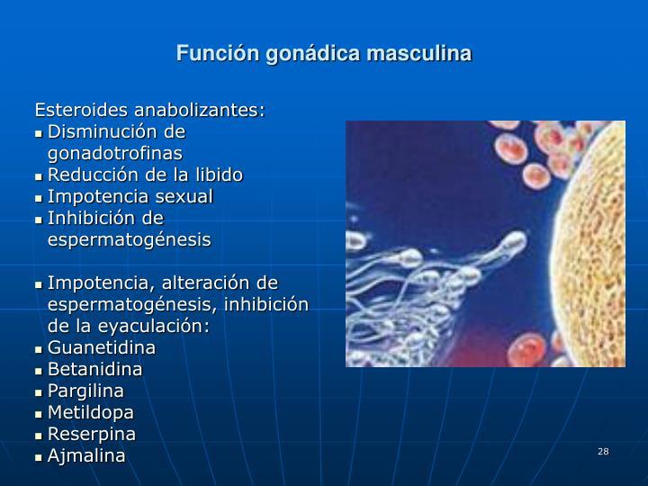 Función gonádica masculina