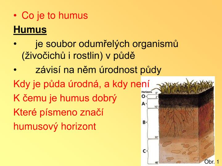 Co je to humus