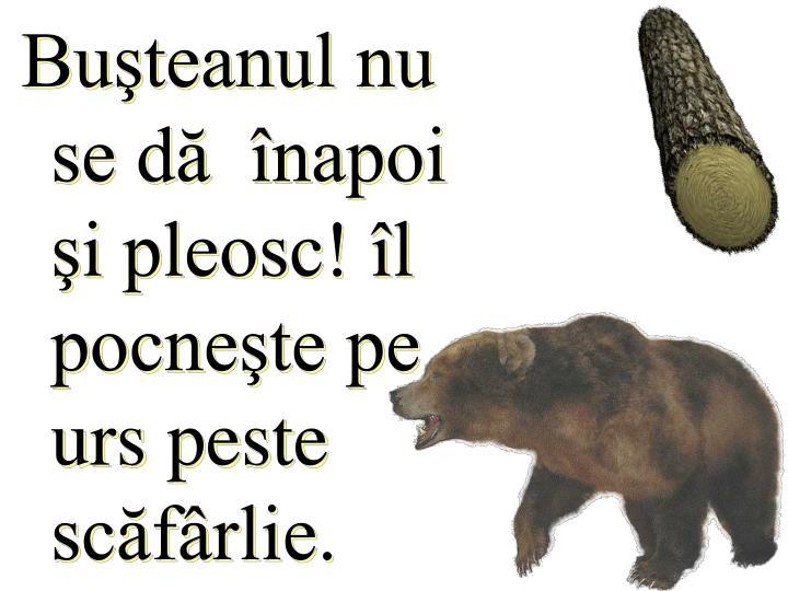 Buşteanul nu se dă  înapoi şi pleosc! îl pocneşte pe urs peste scăfârlie.