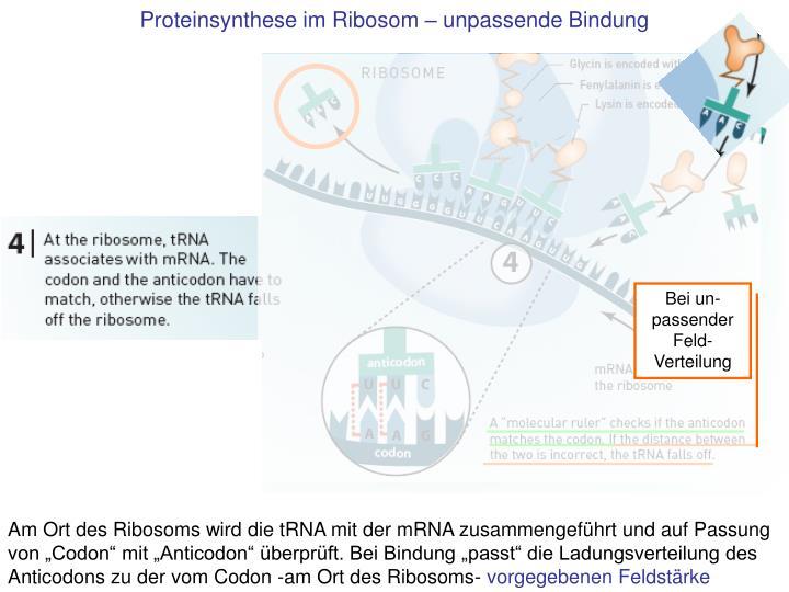 Proteinsynthese im Ribosom – unpassende Bindung