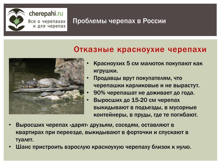Проблемы черепах в России