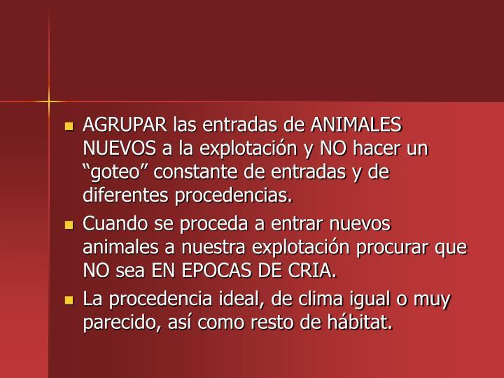 AGRUPAR las entradas de ANIMALES NUEVOS a la explotacin y NO hacer un goteo constante de entradas y de diferentes procedencias.