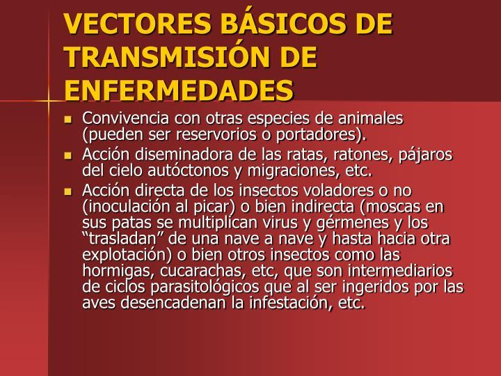 VECTORES BSICOS DE TRANSMISIN DE ENFERMEDADES