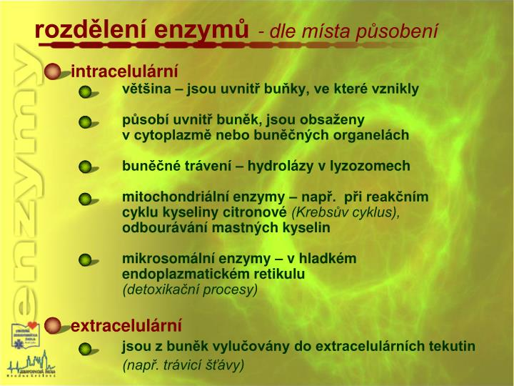 rozdělení enzymů