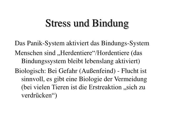 Stress und Bindung