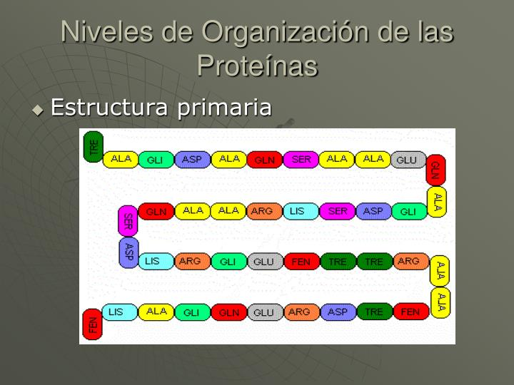 Niveles de Organización de las Proteínas