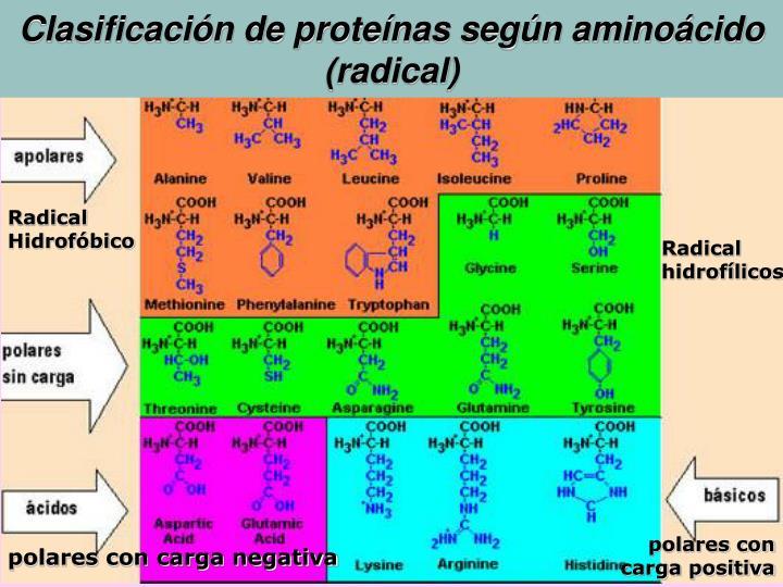 Clasificación de proteínas según aminoácido (radical)