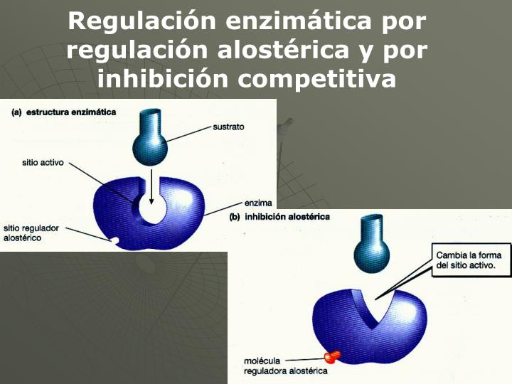 Regulación enzimática por regulación alostérica y por inhibición competitiva