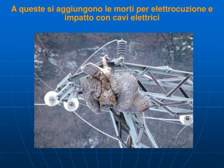 A queste si aggiungono le morti per elettrocuzione e impatto con cavi elettrici