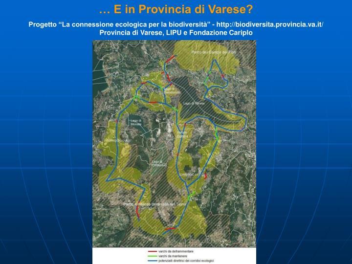 … E in Provincia di Varese?