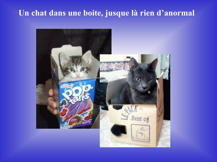 Un chat dans une boite, jusque là rien d'anormal