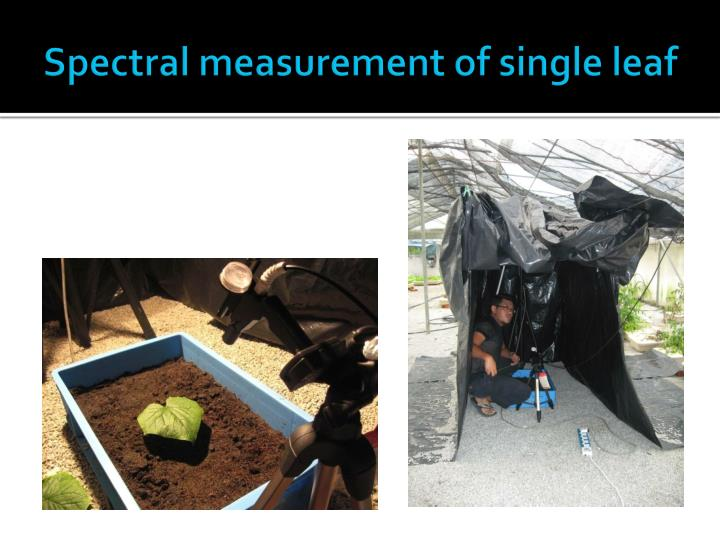 Spectral measurement of single leaf
