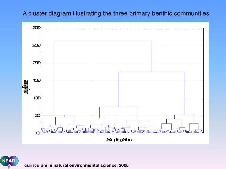 A cluster diagram illustrating the three primary benthic communities