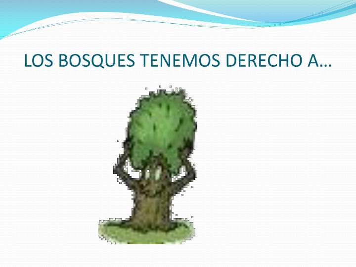 LOS BOSQUES TENEMOS DERECHO A…