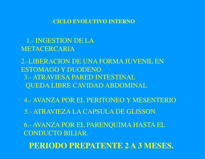 CICLO EVOLUTIVO INTERNO