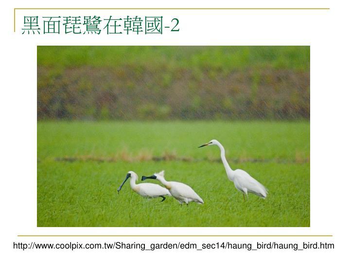 黑面琵鷺在韓國
