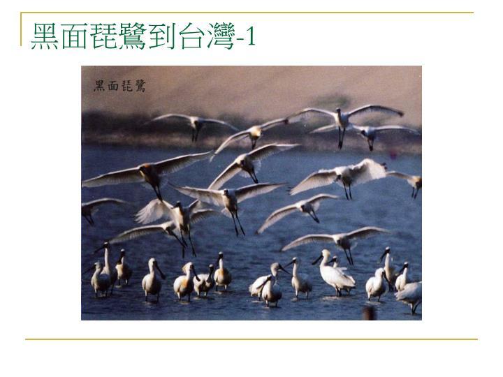 黑面琵鷺到台灣