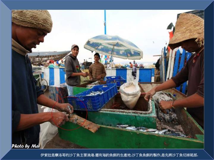 伊索拉是摩洛哥的沙丁魚主要漁港